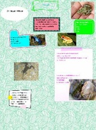 McLean Frogs's thumbnail