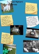 West Highland Terriers. Long Term 's thumbnail