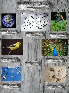 Encyclopedia of Life: Birds