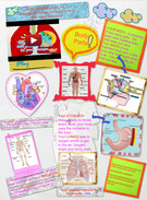 Organization and development of Living Organism.'s thumbnail