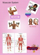muscular system's thumbnail