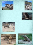 Animals and Ecosystems's thumbnail