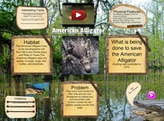 American Alligator's thumbnail