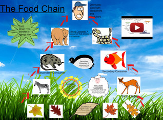 Biology: The Food Chain
