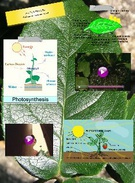 westernphotosynthesis's thumbnail