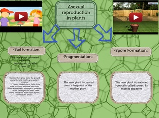 Asexual reproduction in nPlants