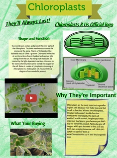 Chloroplasts