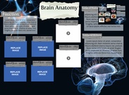 [2015] Thomas Nuss: Brain Anatomy's thumbnail