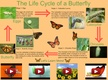 The Life Cycle of a Butterfly thumbnail