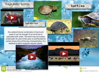 Fresh water biomes - turtles
