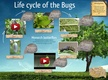 Life cycle of the Bugs thumbnail