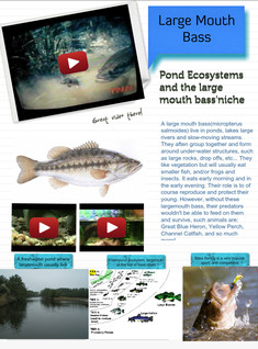 Large Mouth Bass (Pond Ecosystem)