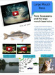 Large Mouth Bass (Pond Ecosystem) thumbnail