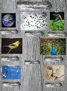 Encyclopedia of Life: Birds's thumbnail