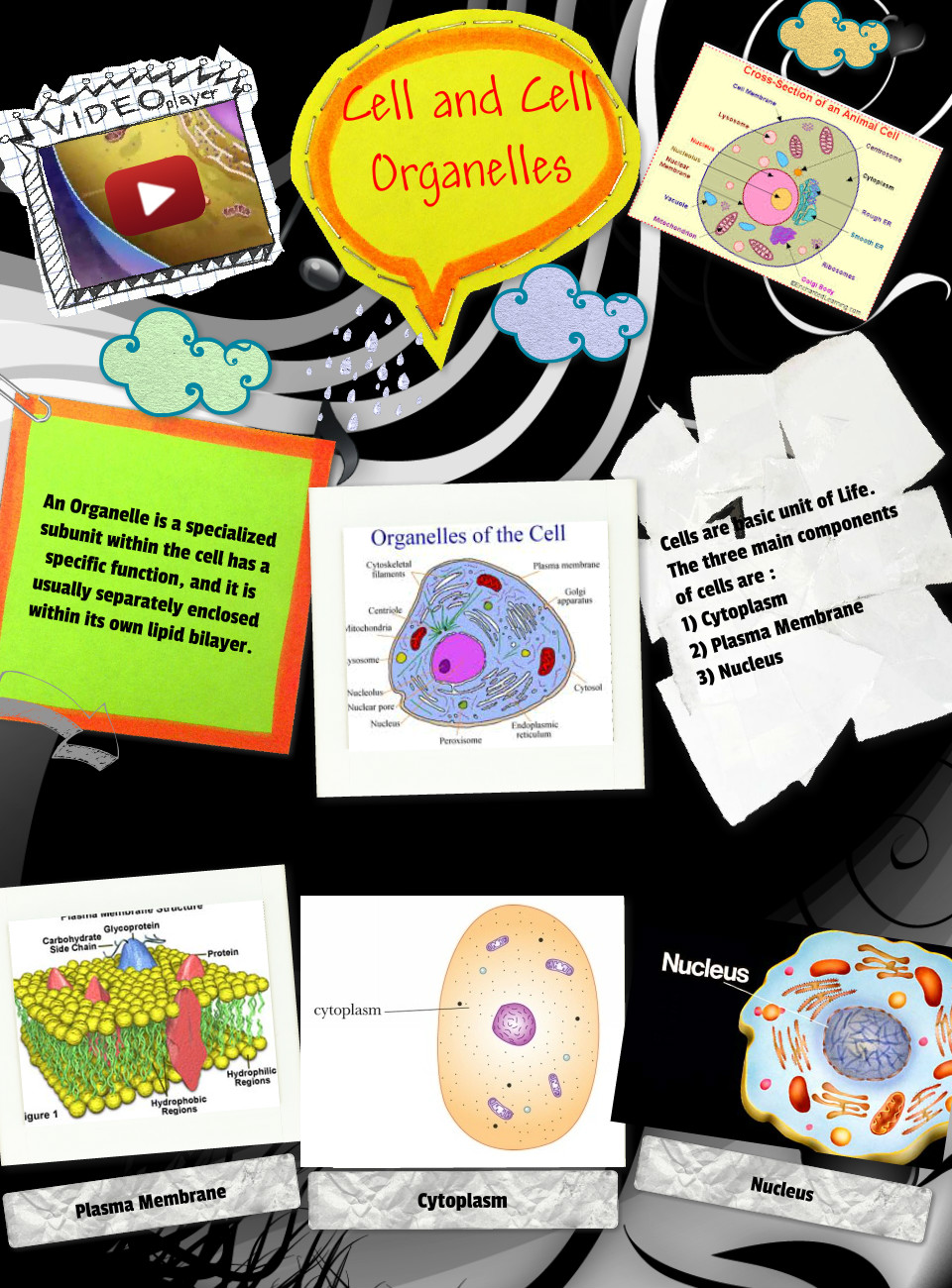 Cell and Cell Membrane