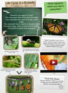 Life Cycle of a Butterfly's thumbnail