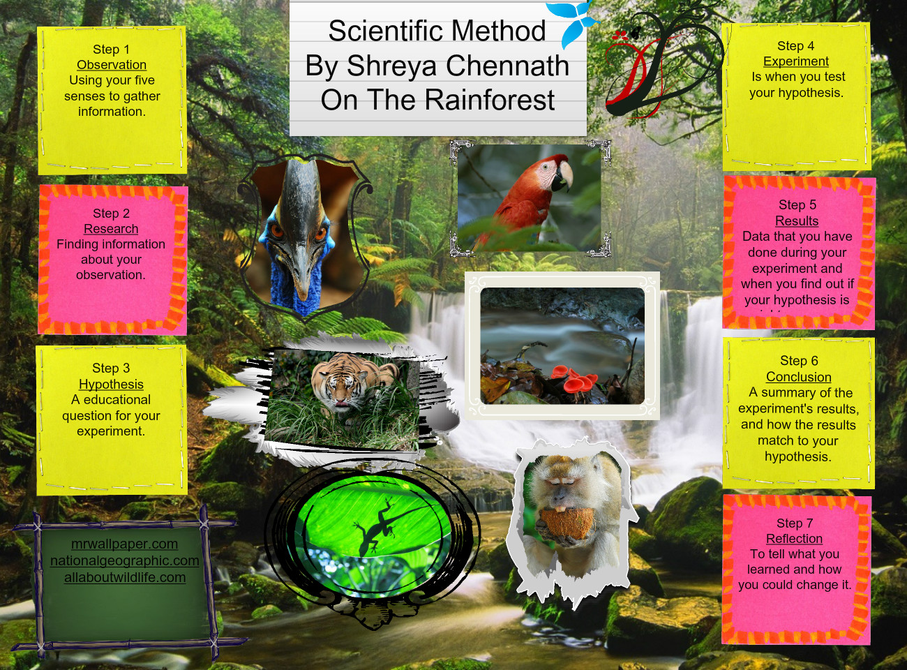 Scientific Method On The Rainforest
