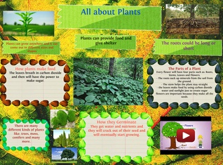 All About Plants!