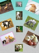 baby animals's thumbnail