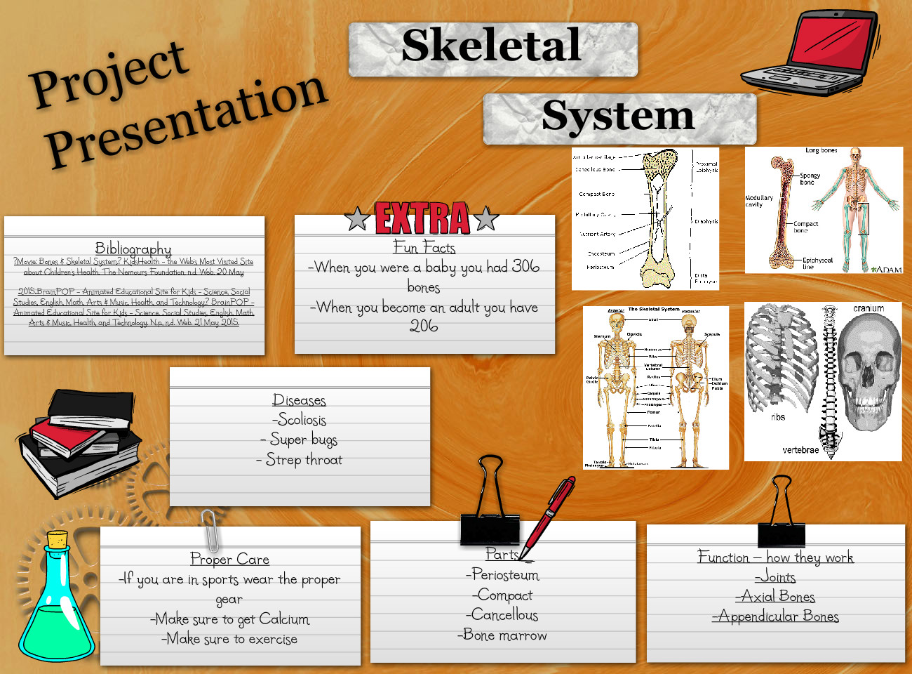[2013] Kaitlyn Small: Skeletal System