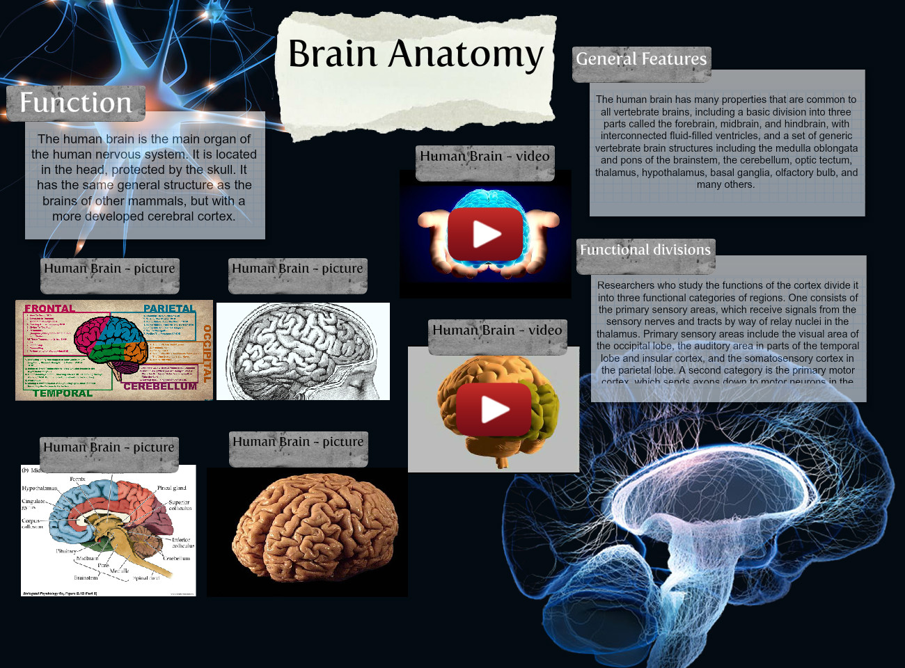 Brain Anatomy Anatomy Biology Brain En Functions Hemispheres