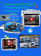 save the whales's thumbnail