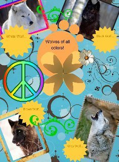 wolves of all colors!
