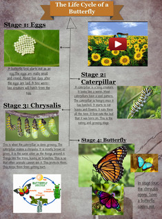 [2014] ashley schu: The Life Cycle of a Butterfly