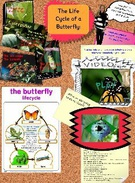 glog-edf315/butterflylifecycle's thumbnail