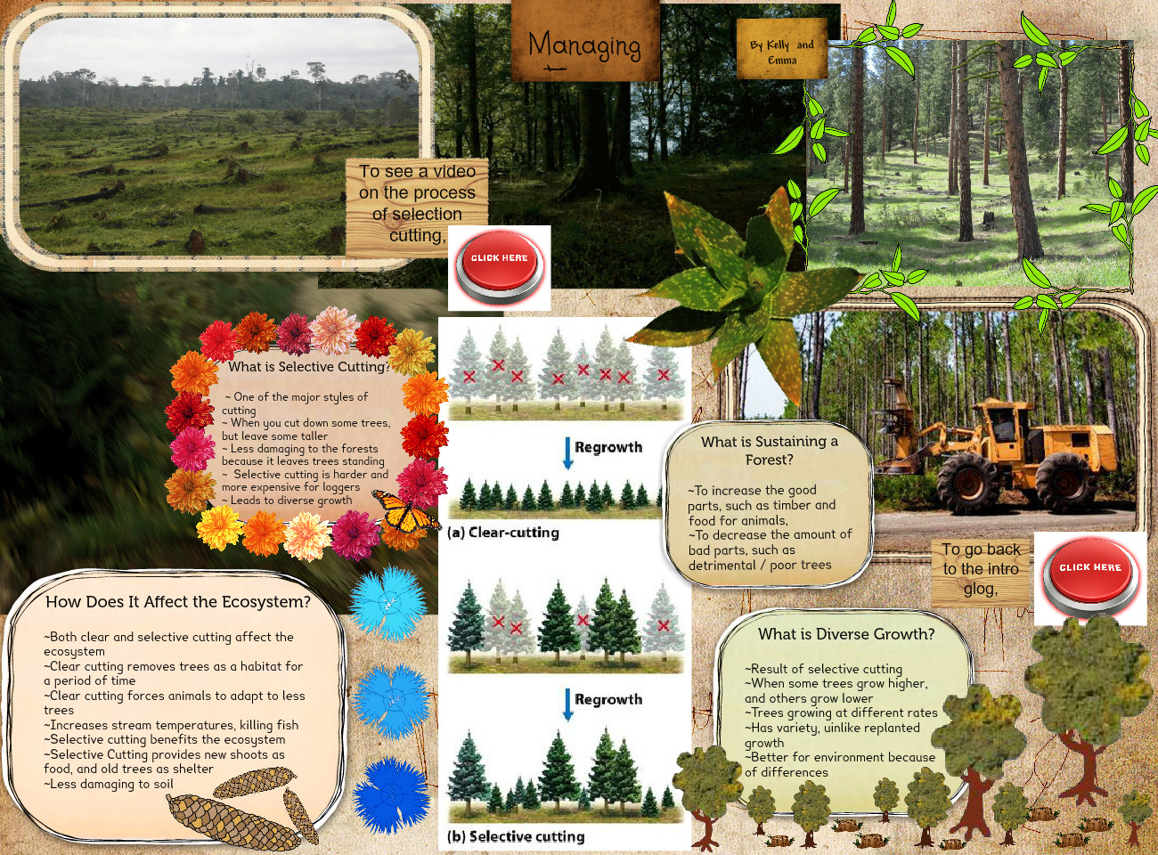 [2015] Kelly T (6th Earth Science 2015): Managing Forests