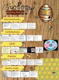 'Biology: Building Blocks' thumbnail