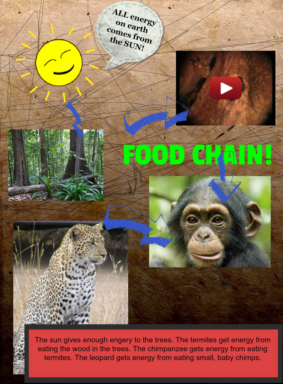 A Food Chain by Mrs. AK