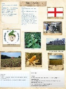 England's Agriculture's thumbnail